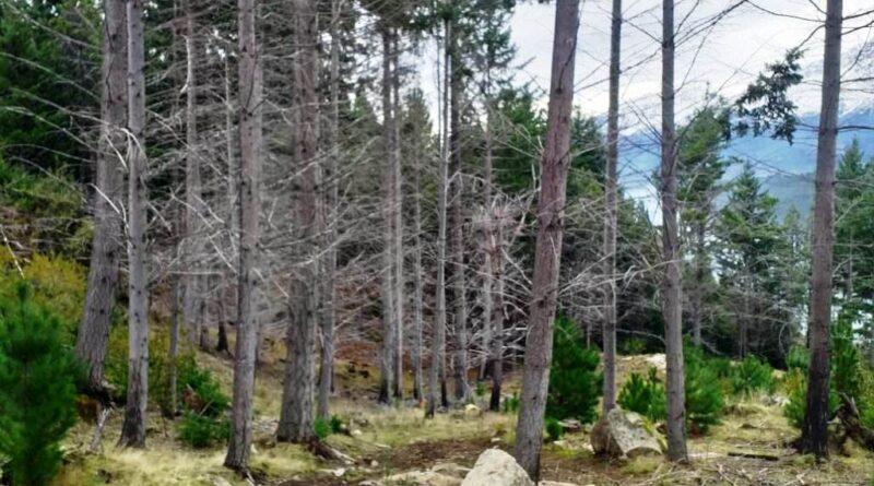 Planifican tareas de extracción forestal en las reservas de la Comarca Andina