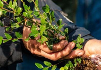 Lago Futalaufquen: Provincia fortalece la producción de plantas nativas en el vivero de la Escuela N° 25